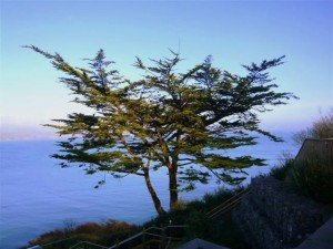 A tree growing on the side of a cliff in Ardmore County Waterford