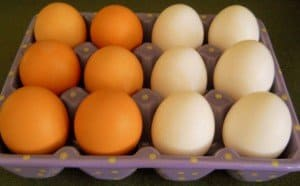 six brown and six white eggs in a purple delph egg holder