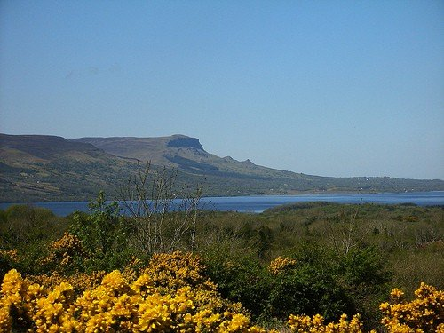 Yellow gorse or furze near a lake in County Fermanagh