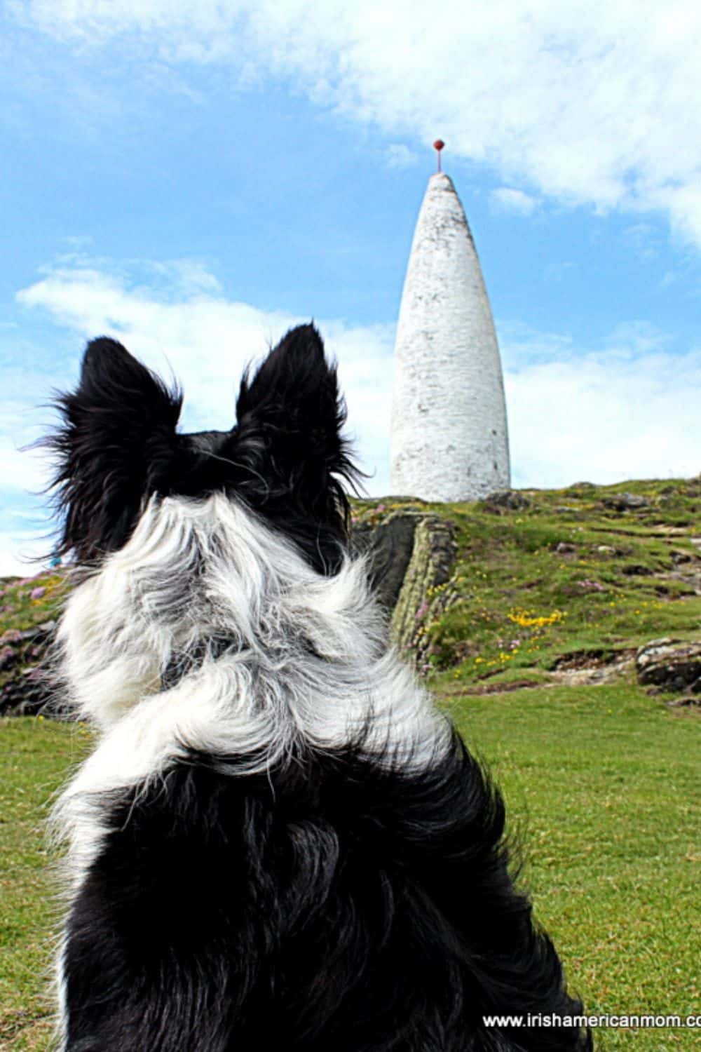 A black and white border collie looks at the Beacon monument in Baltimore County Cork