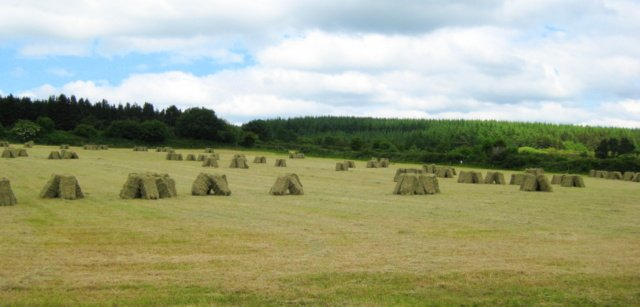 Stacks of hay bales leaning against each other in a field on an Irish farm