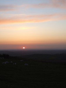 Sunset over a field of sheep