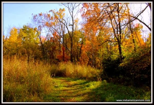 Fall Foliage in Kentucky 2012