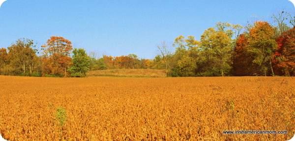 Fall Meadow - Kentucky