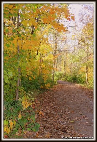 Leafy path in fall