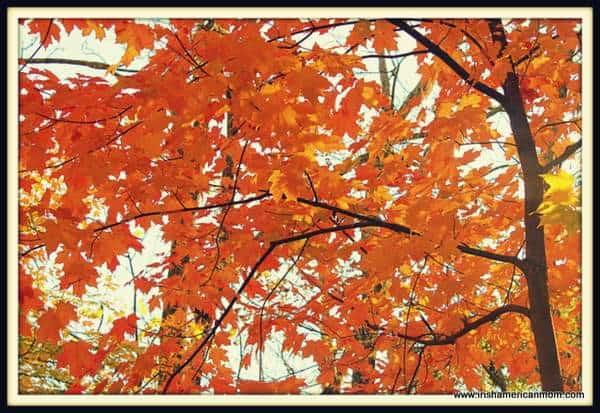 Orange Leaves of Fall