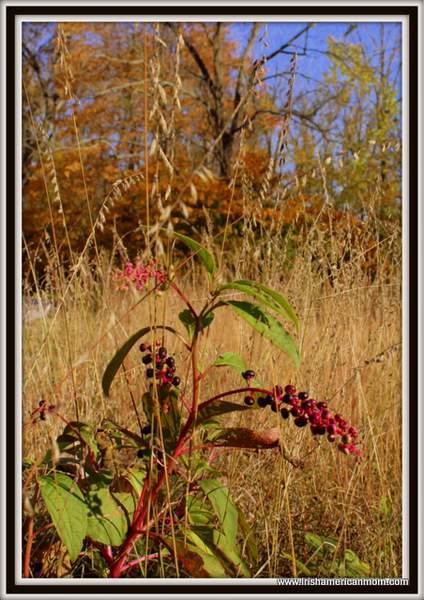 Wild Fall Berries In Kentucky