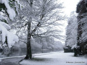 Snow covered trees beside a river in Doneraile County Cork