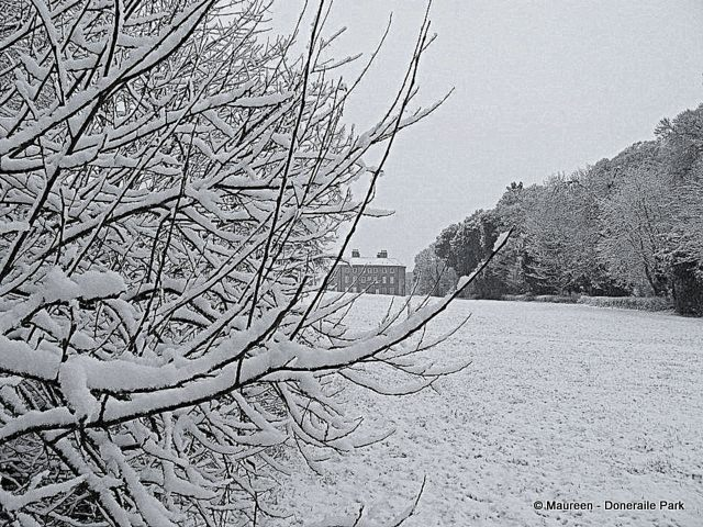 A close up of a tree covered in snow beside a snowy field