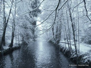 snowy tree branches on a river bank in Ireland