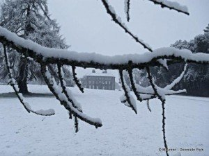 A branch of a tree balancing snow and framing a view of the big house in Doneraile park