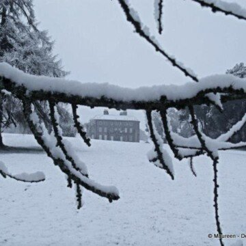 A branch of a tree balancing snow and framing a view of a big house