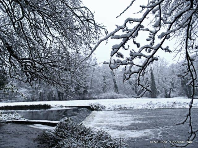 Tree branches balancing snow in Doneraile Park beside the river and weir