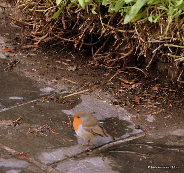 A bird sitting on the ground