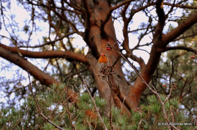 A close up of a tree with a robin on a branch