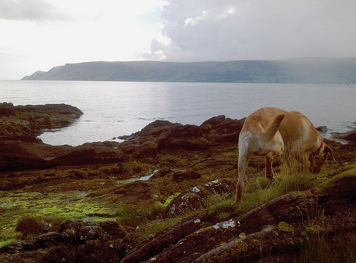 A dog in the mist on a coastline