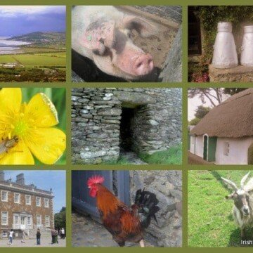 stone walls, pig, milk churns and a goat in an Irish photo collage