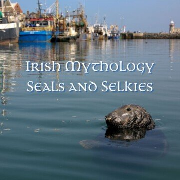 Seal in water beside boats with text overlay