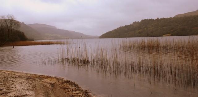 Reeds On Glencar Lake