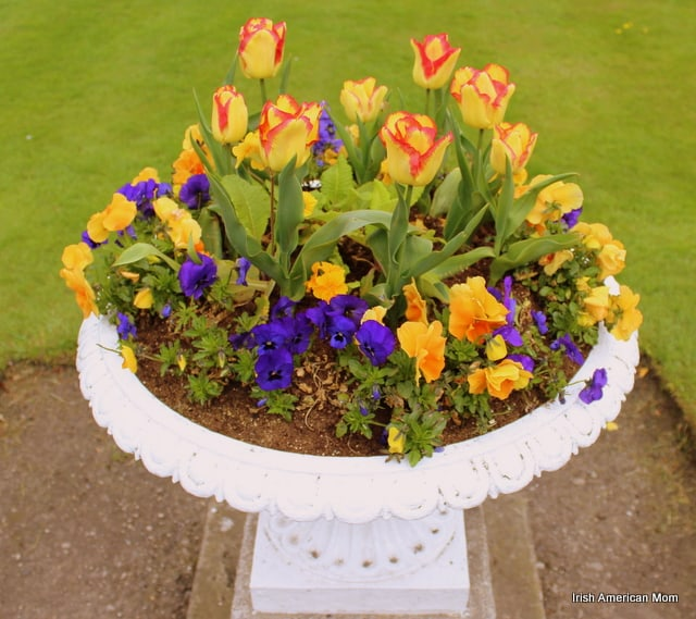 Dublin's Tulips And Pansies