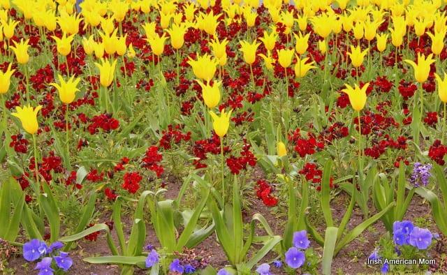 Flowers Of St. Stephen's Green