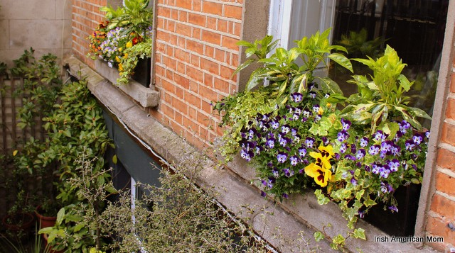 Window Box Flowers in Dublin
