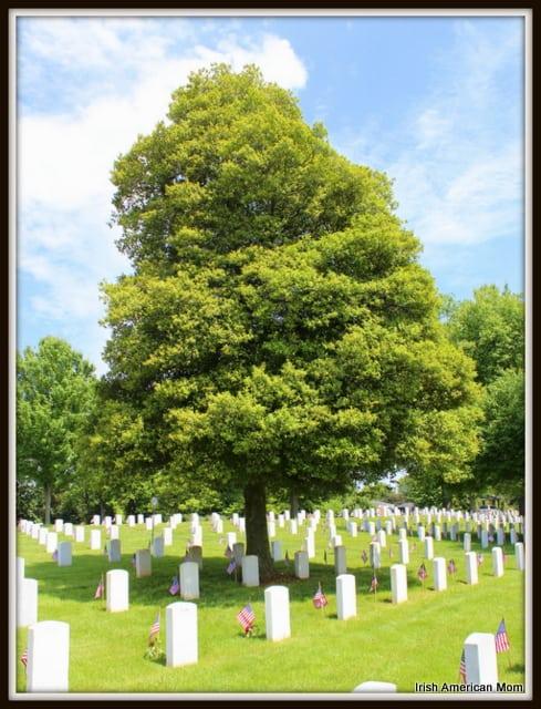 Tree at Zachary Taylor Cemetry