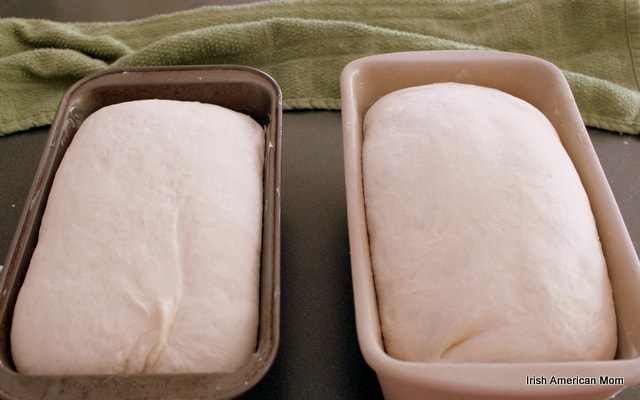 Risen potato bread dough in loaf pans