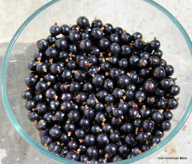 Bowl Of Black Currants