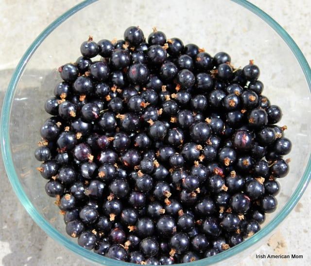 Bowl Of Black Currants