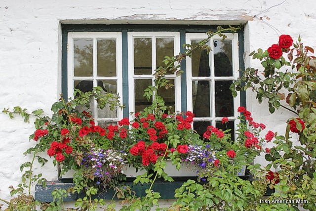 red and purple flowers in a cottage window flower display box