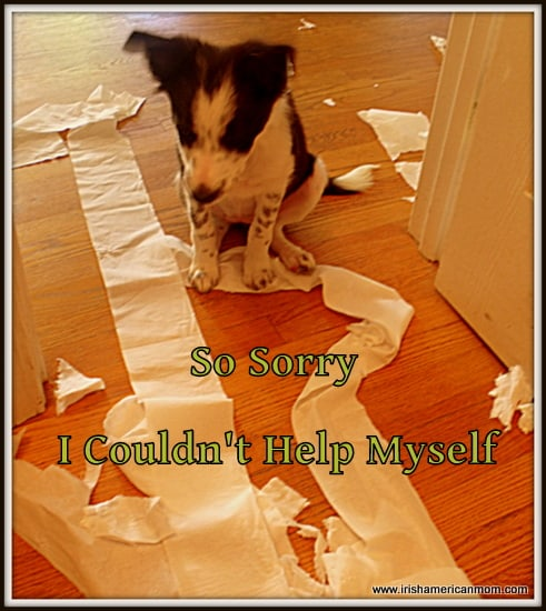 Border Collie Puppy - Toilet Paper Play