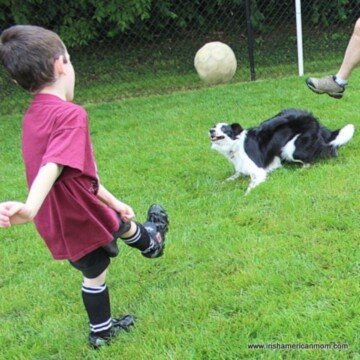 Dog playing football with a boy