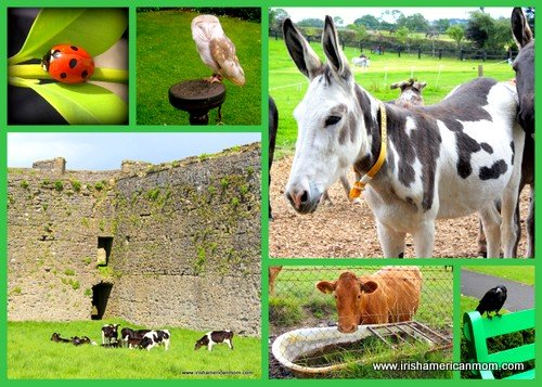 Ladybird, owl, donkey, cows and a black crow on an Irish animal photo collage
