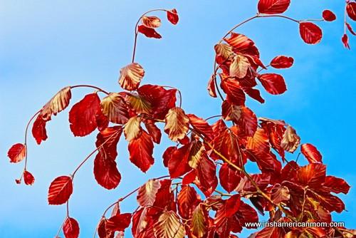 Orange leaves against a blue sky