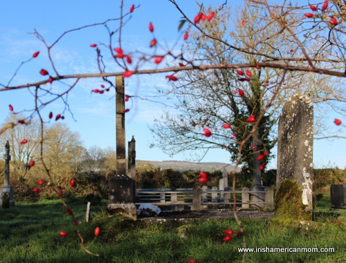Red berries at Christmas in an Irish graveyard