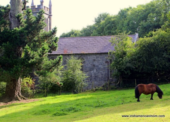 A small brown Connemara pony grazing in a field by a stone church