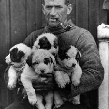 Black and white photo of Tom Crean with a pipe and holding four puppies