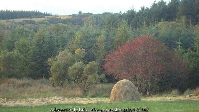 Ash Tree and Haystack, County Donegal