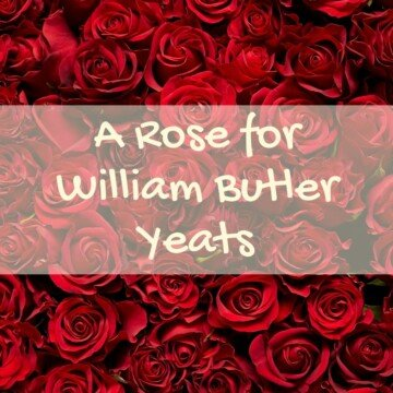red roses with a text banner