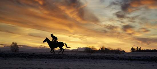 Horse exercising on the Curragh, Kildare