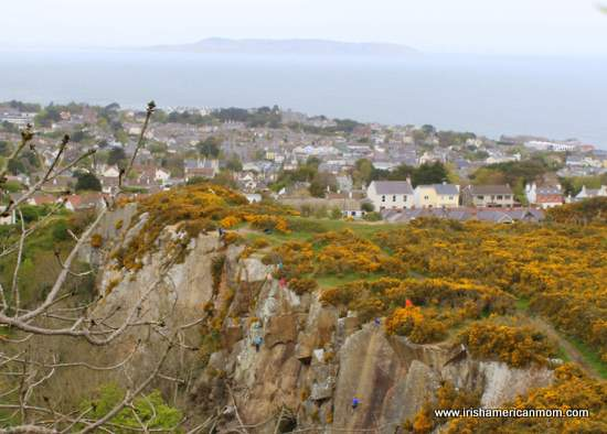 Furze bushes above Dalkey quarry