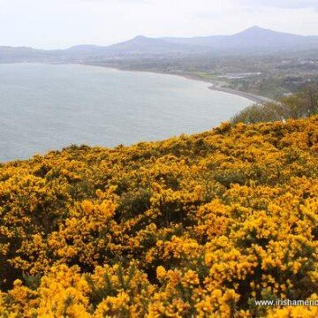 Looking toward Bray and Graystones from Killiney Hill