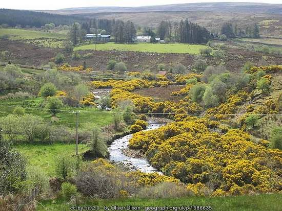 The Yellow River - An Abhainn Bhui - yellow furze in Ireland