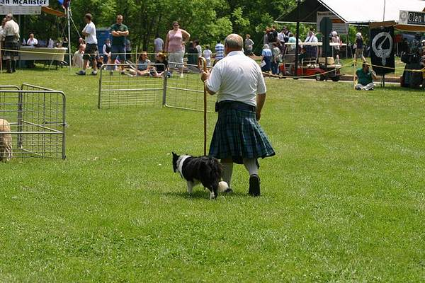 Border collie with kilt wearing herder