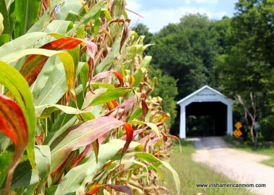 A corn field beside a covered bridge