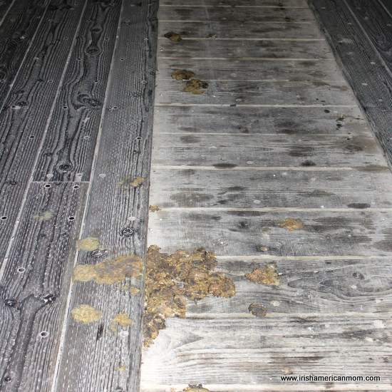 Wooden bridge - evidence of horse crossings