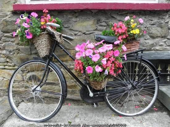 Black bicycle with flowers on display