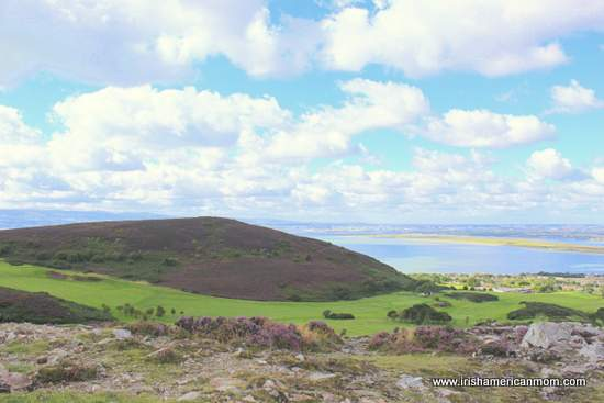 Heather covering Howth Hill