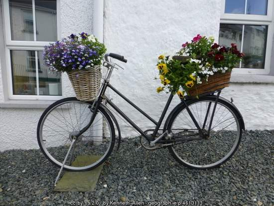 Old Bicyce - the perfect planter
